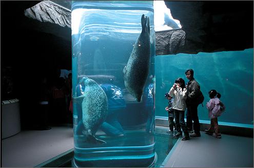 旭山動物園 水槽