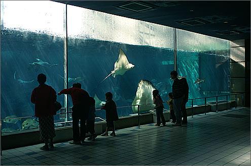 須磨 水族館